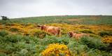 Parque Nacional de Dartmoor - 231668906