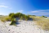the dunes, Renesse, Zeeland, the Netherlands - 231676319
