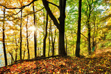 Warm autumn scenery in a forest, with the sun casting beautiful rays of light through the mist and trees - 231682502
