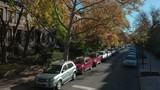 Autumn rising over a tree on a Carroll Gardens corner - 231700399