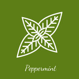 Peppermint vector icon - 231704905