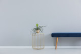 Green plant in golden pot on the stylish table next to blue velvet settee, real photo with copy space - 231706727