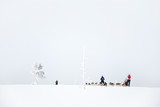 Husky dog sledding in Lapland, Finland - 231706915