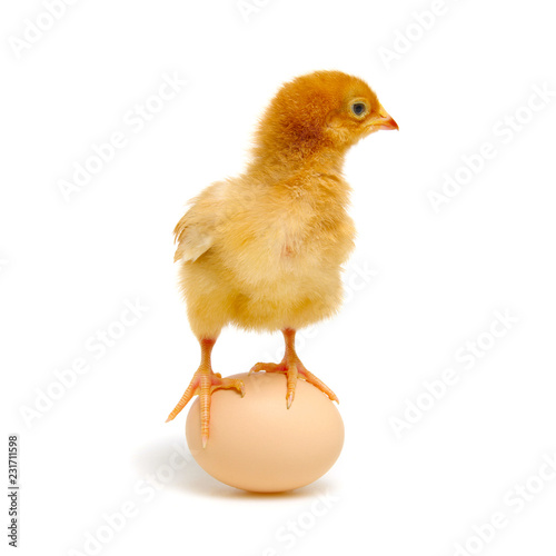 Leinwanddruck Bild chick and egg isolated on a white