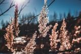 Autumn sun beautifully illuminates the grass growing on the lake - 231717577