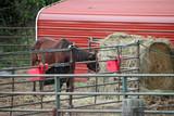 horses outside in a rustic metal pen - 231718322