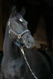 pferd portrait - 231724162