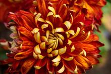 "Постер, картина, фотообои ""orange flower"""