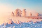 Sunny xmas nature - 231727946