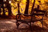 Bench in the autumn park - 231729968