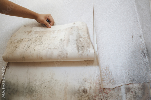 Leinwanddruck Bild girl found mold in the corner of your bathroom , in your residential building after renovation