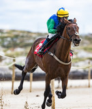 Close-up of jockey and race horse galloping on the beach - 231753383