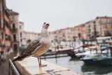 Nahaufnahme einer Möwe mit Canal Grande und Booten im Hintergrund