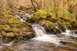 Aira Beck, Cumbria, England - 231762101