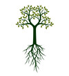 Green shape of  Tree. Vector Illustration.