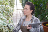 Woman with tablet inspecting plant - 231785322