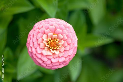 Sticker Blume, Blüte, Makro, Bunt, Farbig, Garten, Natur