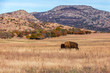 Bison on the range at the Wichita Mountains Wildlife Refuge, located in southwestern Oklahoma.