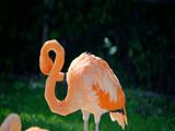 pink flamingo in zoo