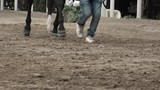 A trainer leads a trotting horse through an arena - 231795793