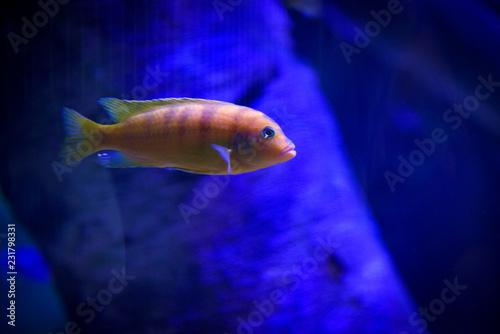 Leinwandbild Motiv fish in aquarium