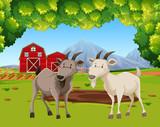 Two goats in farm scene - 231802322