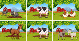 Set of animals on farms - 231803383