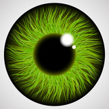 Iris of the human eye. Isolated on light background.