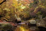 秋のマゼノ渓谷は黄金の世界 - 231825506