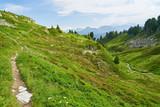 Alpen Panorama mit Wanderweg und Bergen - 231844987