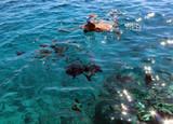 swimming in the sea.