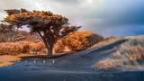 Infrared image of vegetation amongst sand dunes - 231849332