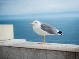 Möve auf Mauer mit am Mittelmeer