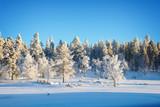 Forest landscape, frozen trees in winter in Saariselka, Lapland, Finland - 231862300
