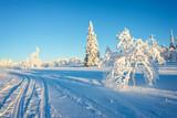 Snowy landscape, frozen trees in winter in Saariselka, Lapland, Finland