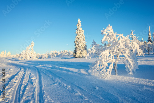 Snowy landscape, frozen trees in winter in Saariselka, Lapland, Finland
