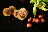 sweet chestnuts, spiny cupules and leaves from above on black background - 231875922