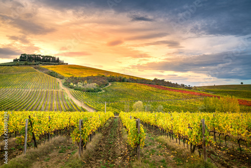 Foto Murales Chianti region, Tuscany. Vineyards at sunset in autumn. Central Italy