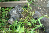 kittens play in the grass - 231889739