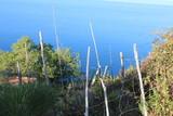 Recinto rustico con pali in legno a picco sul mare - 231895763