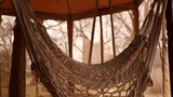 A lonely hammock hanging. - 231901100