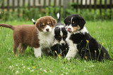 Puppies together in the garden
