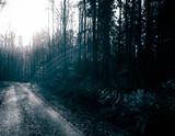 Mysterious autumnal forest landscape. - 231923538