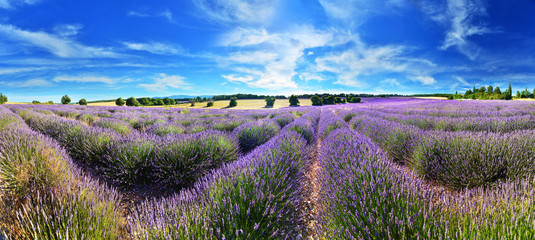 Lavender field in summer countryside © denis_333