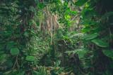 inside jungle , in rainforest / tropical forest landscape - 231932726