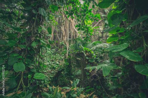 wewnątrz dżungli, w lesie deszczowym / krajobraz lasu tropikalnego