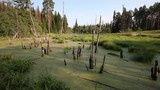 View of the marsh in the wilderness. quiet place for relaxation - 231935368