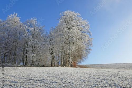 Winterwald, Bern, Schweiz - 231948738