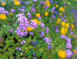 a feast of violet and yellow wild flowers, strong blur background