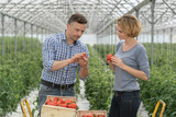 Man and woman working looking carefully to the tomatoes production - 231972986